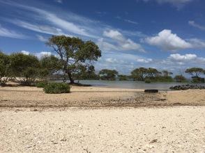 Mangrove beach and bay