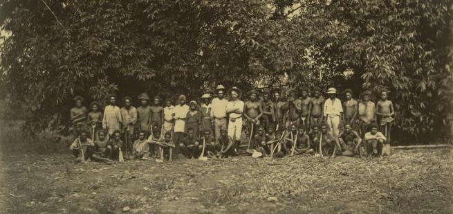 South Sea Islanders canefield